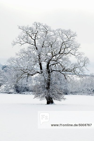 Winter scene - Herefordshire - England UK.