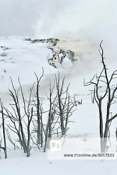 Mammoth Hot Springs  Winter  Yellowstone NP  WY