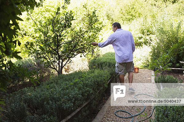 Rückansicht eines Mannes  der den Baum im Garten berührt