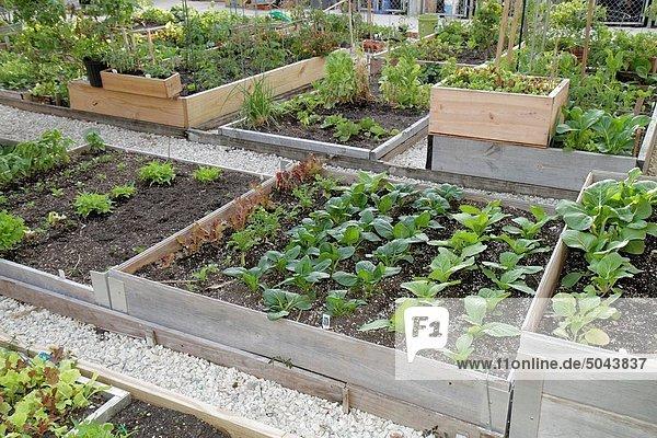 Wachstum, Pflanze, Gartenbau, Florida, Miami Beach