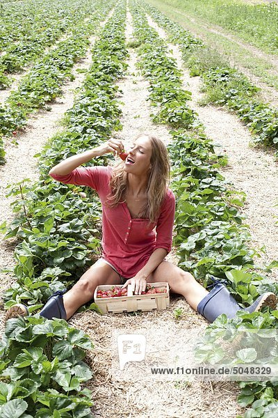 Junge Frau im Erdbeerfeld Junge Frau im Erdbeerfeld