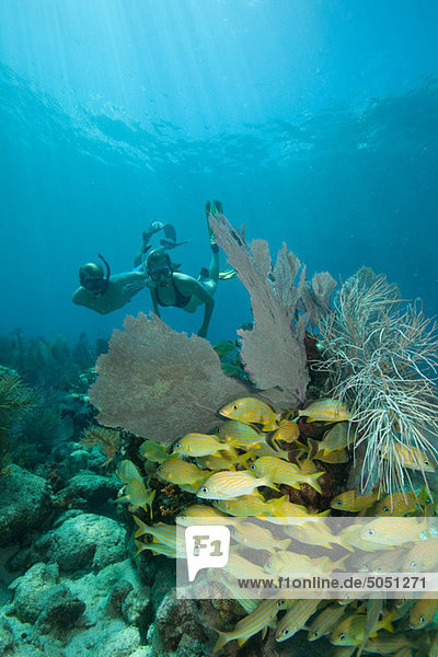 Couple snorkels on coral reef