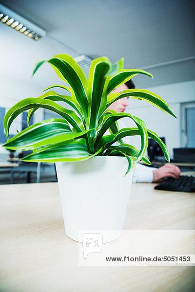 Büroangestellte sitzt am Schreibtisch hinter der Topfpflanze