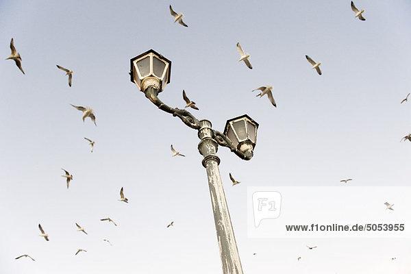 Vögel fliegen über Laternenpfahl