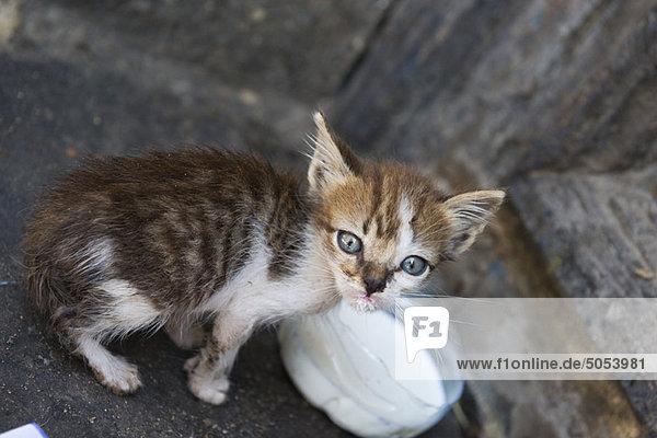 Kätzchen mit Milchschale