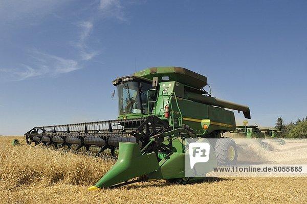 Landwirt kombiniert ein Feld in der Nähe von Mundare  Alberta  Kanada