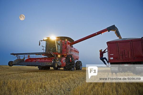 ein Mann überprüft die Fülle der ein Korn-LKW wie eine Combine Harvester entlädt Weizen während der Ernte  in der Nähe von Dugald  Manitoba  Kanada ein Mann überprüft die Fülle der ein Korn-LKW wie eine Combine Harvester entlädt Weizen während der Ernte, in der Nähe von Dugald, Manitoba, Kanada