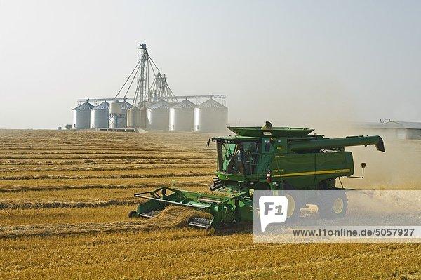 Ein Mähdrescher ernten frühling Weizen  Grain Handling Anlage im Hintergrund  in der Nähe von Somerset  Manitoba  Kanada Ein Mähdrescher ernten frühling Weizen, Grain Handling Anlage im Hintergrund, in der Nähe von Somerset, Manitoba, Kanada