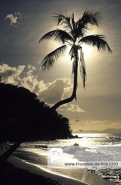 Britische Virgin-Islands  Tortola  Cane Garten Bay
