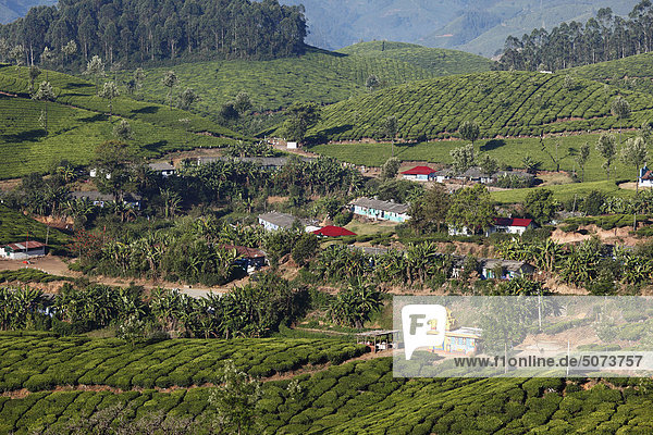 Indien  Südindien  Kerala  Munnar  Blick auf Teeplantagen