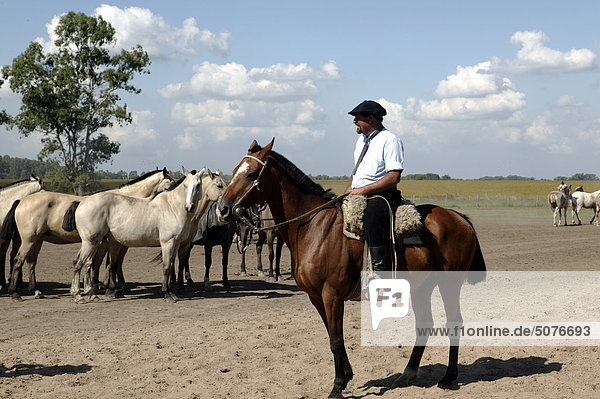 Südamerika  Argentinien  Gaucho mit Pferden auf La Pampa Estancia