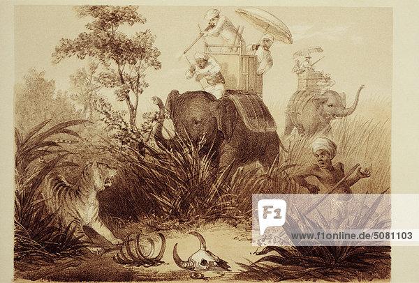 Engländer Jagd Tiger  Illustration aus dem Buch Curry und Reis Engländer Jagd Tiger, Illustration aus dem Buch Curry und Reis