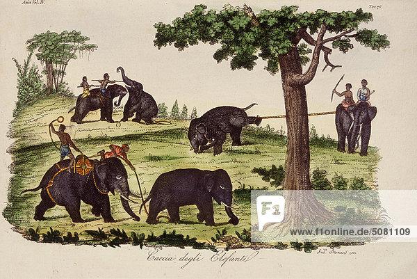 Indien  Elefanten-Jagd Indien, Elefanten-Jagd