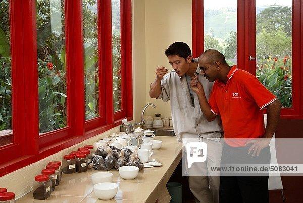 Tee-Verkostung BOH Tea Plantation in Cameron Highlands  Malaysia