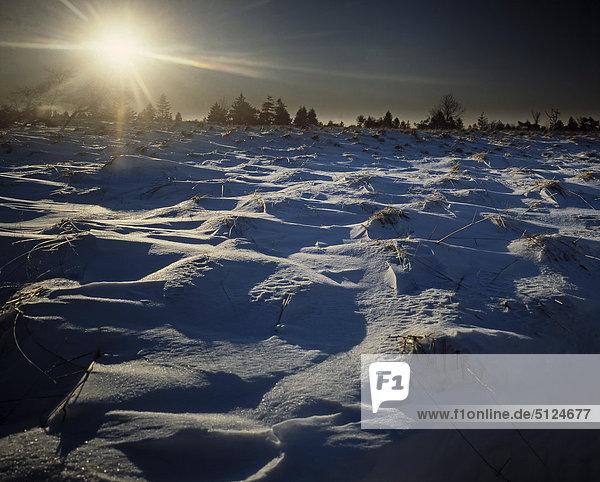 Belgien  Fagne  Baraque Michel Winterlandschaft