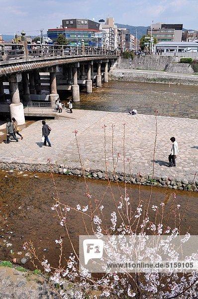 blühen  Baum  Fluss  vorwärts  Anfang  Kyoto