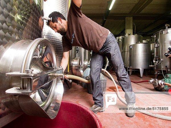 Weingut  arbeiten  Winzer  Emilia-Romangna  Italien