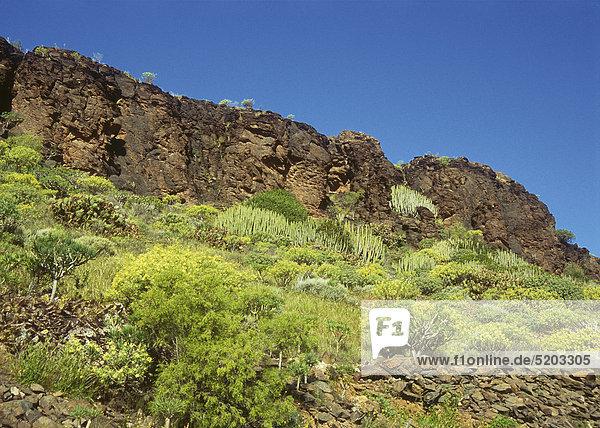 Bewachsener Berghang  Gran Canaria  Spanien