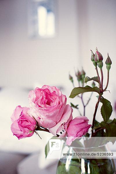 Rosa Rosen in Vase