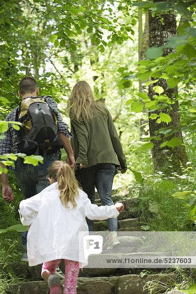 Familie  Wandern im Wald  Rückansicht