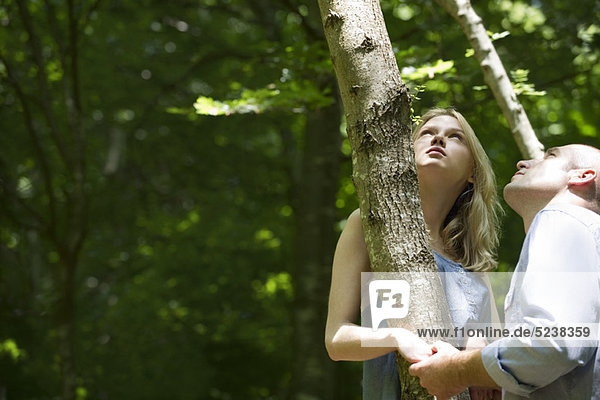 Paar halten Baumstamm  Blick nach oben