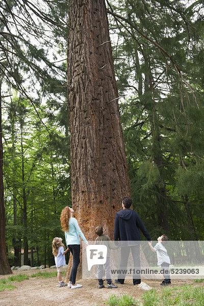 Familie stehen zusammen auf Basis der Baum  Hände halten  Rückansicht