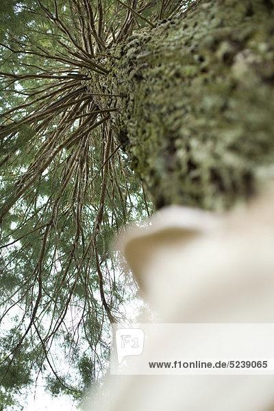 Baum  Flachwinkelansicht starrte Person