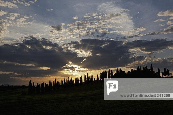 Italien  Toskana  Kreta  Blick auf Bauernhof mit Zypressen bei Sonnenuntergang