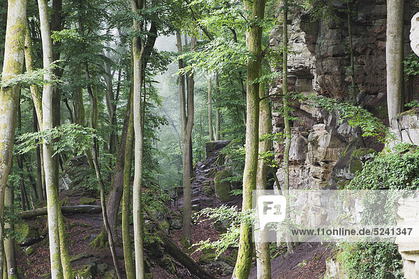 Deutschland  Rheinland-Pfalz  Eifel  Naturpark Südeifel  Blick auf Buntsandsteinformationen im Buchenwald Deutschland, Rheinland-Pfalz, Eifel, Naturpark Südeifel, Blick auf Buntsandsteinformationen im Buchenwald