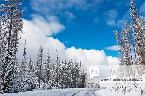 Winter snow covered road in Yellowstone National Park USA