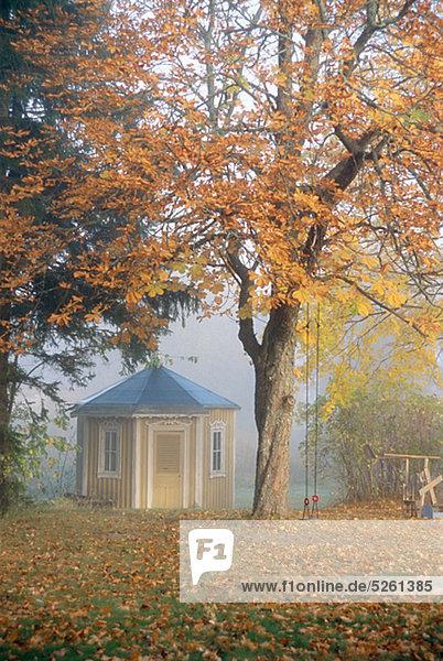 Baum Herbst Laubbaum