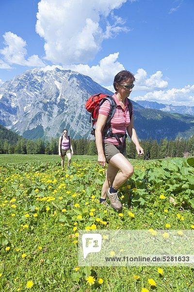Zwei Frauen wandern auf der Priesbergalm  Berchtesgadener Alpen  Deutschland