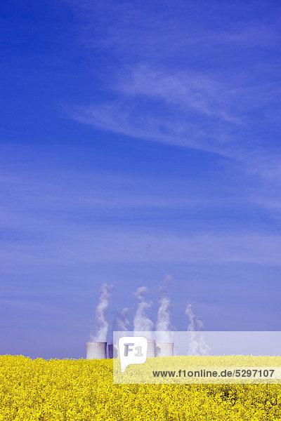 Feld Raps Brassica napus Atomkraftwerk