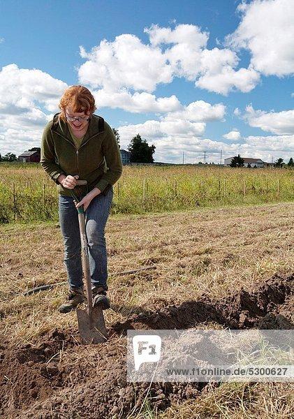 Chance Unterstützung klein Gemüse Landwirtschaft ernten Bauernhof Hof Höfe Wachstum Gemeinschaft verkaufen Pflanze Markt Kartoffel Freiwilliger Landwirtin Internet Michigan