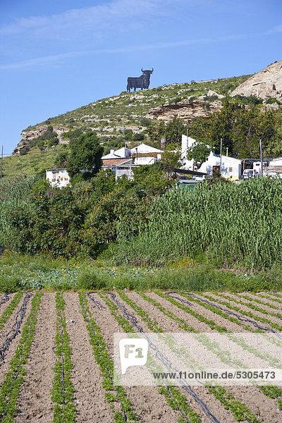 Feld  weiter hinten die Silhouette eines Stiers  Werbung  Costa del Sol  Andalusien  Spanien  Europa