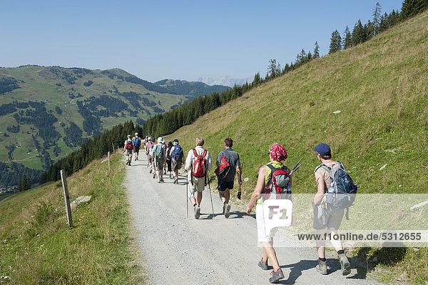 Hiking group walking along a wide path  Saalbach-Hinterglemm  Kitzbuhel Alps  Salzburg  Austria  Europe