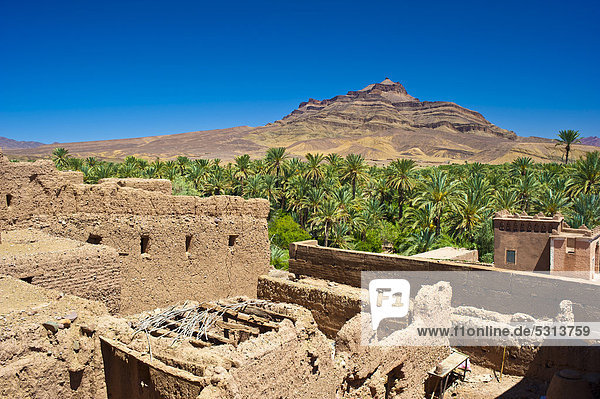 View from the roof of a decaying kasbah  mud fortress  mud brick building of the Berber tribes  Tighremt  across a palm grove and Djebel Kissane mountain  Draa-Valley  Southern Morocco  Morocco  Africa