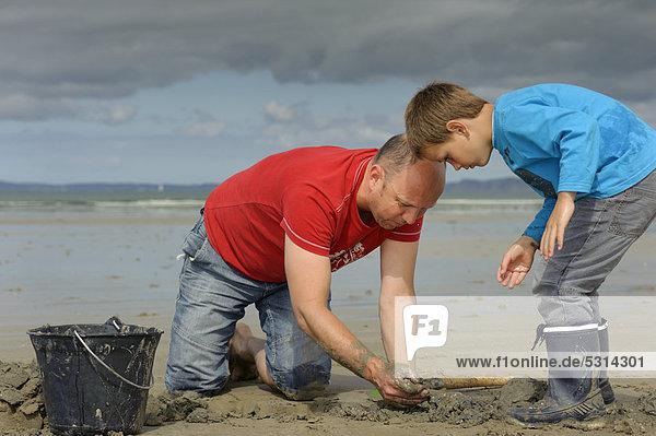 Junger Angler und ein Erwachsener beim Graben nach Wattwürmern (Arenicola marina) am Atlantikstrand  Finistere  Bretagne  Frankreich  Europa  ÖffentlicherGrund