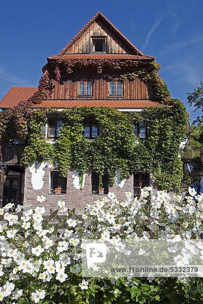 Bauernhaus Europa Garten Hahnenfussgewächs Baden-Württemberg Schwarzwald Deutschland