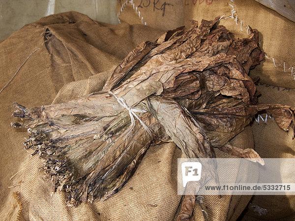 Tabakblätter in der Zigarren-Manufaktur El Sitio  Brena Alta  La Palma  Kanarische Inseln  Spanien  Europa  Atlantischer Ozean