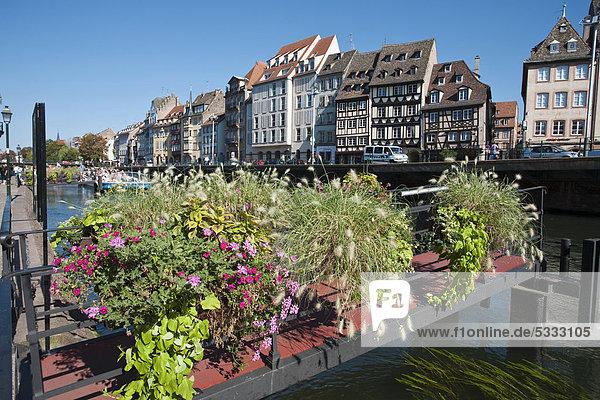 Frankreich Europa Blume Krankheit Brücke Fluss Elsass Straßburg