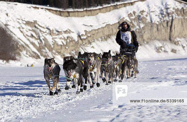 Laufende Schlittenhunde des 4fachen Champion-Mushers Hans Gatt  Mushing  Alaskan Huskies am Start des Yukon Quest 1000-mile International Sled Dog Race 2011 Schlittenhunderennens  gefrorener Takhini River Fluss  Yukon Territory  Kanada