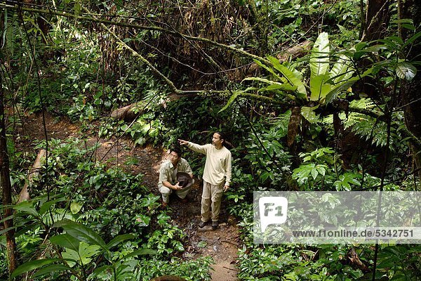 Jungle Trekkingin Cameron Highlands  Malaysia