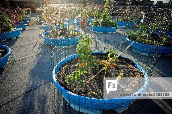 Dach  bauen  benutzen  Planung  Lebensmittel  heben  Küche  Produktion  Bauernhof  Hof  Höfe  Bett  Kirche  Versorgung  auswählen  Nachbarschaft  2  erreichen  Kind  Speisekammer  neu