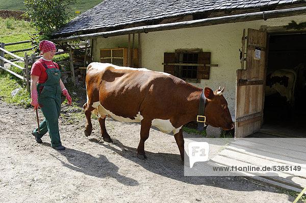 Sennerin treibt ihre Kühe in den Stall  auf der Halsalm  Berchtesgadener Nationalpark  Hintersee  Berchtesgaden  Oberbayern  Bayern  Deutschland  Europa