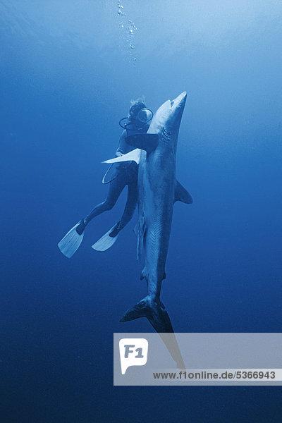 sehen Malediven Asien Indischer Ozean Indik Hai