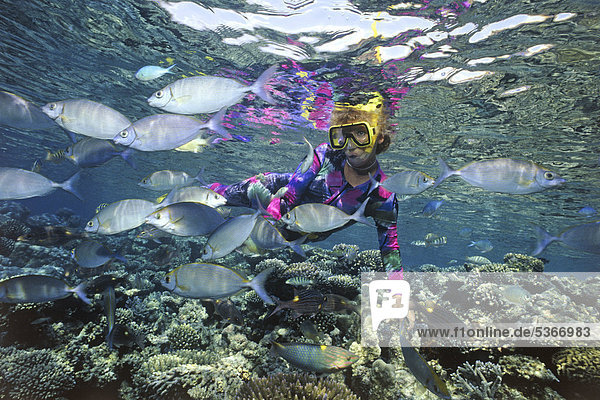 Schnorchlerin in buntem Korallenriff  Kaninchenfische (Siganus)  Malediven  Indischer Ozean  Asien