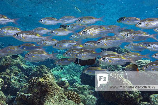 Malediven Asien Indischer Ozean Indik
