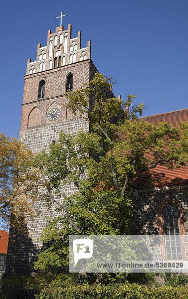 Marienkirche  Angermünde  Brandenburg  Deutschland  Europa