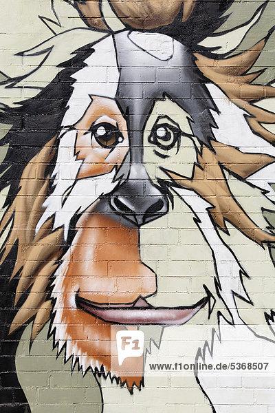 Kopf eines Orang-Utan  Graffito an der Mauer des Kölner Zoos  Köln  Nordrhein-Westfalen  Deutschland  Europa